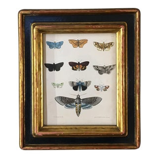 English Framed Moth Lithograph