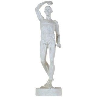 Plaster Artists Model