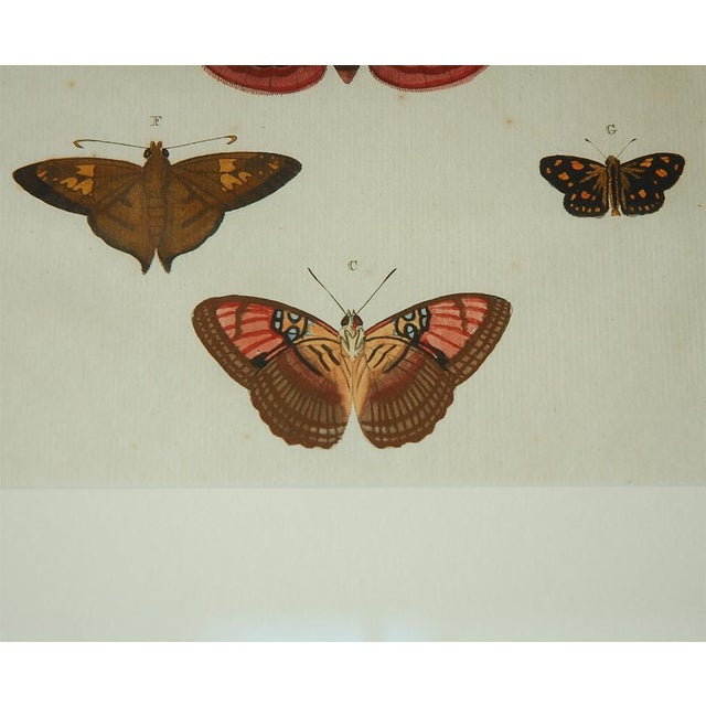 Antique Butterfly Prints Set of Eight - Image 10 of 10