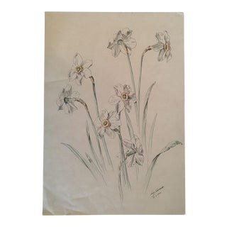 Original Antique Botanical Pen and Ink Drawing or Study of White Daffodils