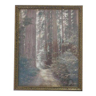 1920 Hand-Colored Silver Gelatin Photograph of California Redwood Trees Arts and Crafts