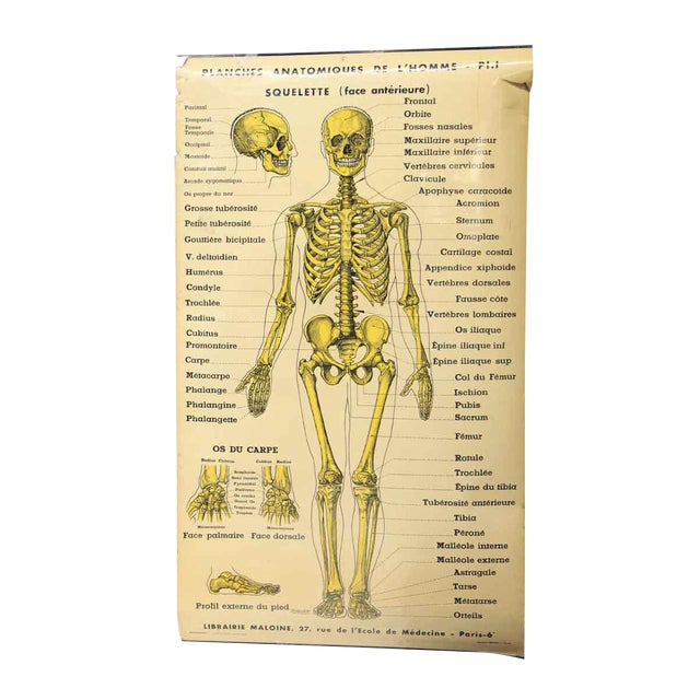french double sided human skeleton poster | chairish, Skeleton
