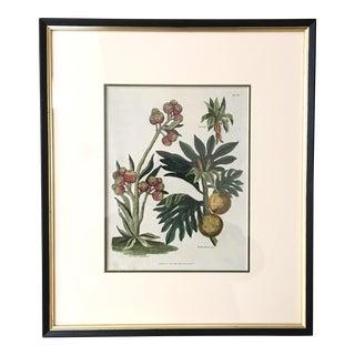 Antique English Botanical Lithograph