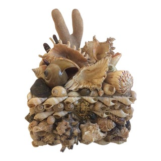 Natural Shell & Sponge Box