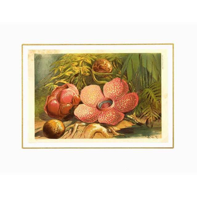 Antique Botanical, 1866 - Image 3 of 3