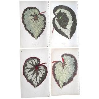 1880 Ornamental Leaves Lithographs - Set of 4