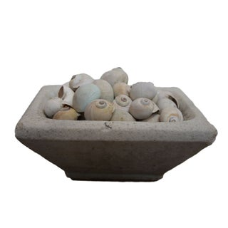 Stone Container with Shells