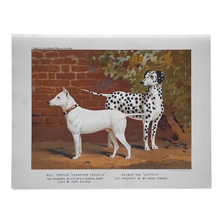 Antique Dog Lithograph - Bull Terrier & Dalmatian