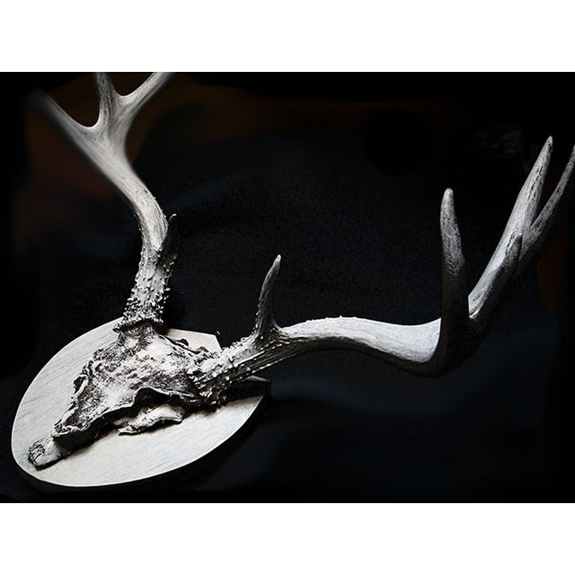 Image of Mounted Deer Antlers