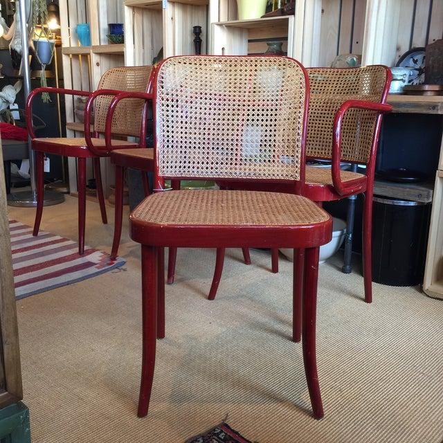 Image of Vintage Josef Hoffmann Bentwood Chairs - Set of 4