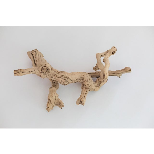 Image of Natural Driftwood