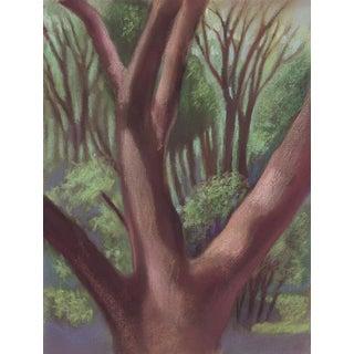 Alvarado Park Trees in San Francisco Bay Area