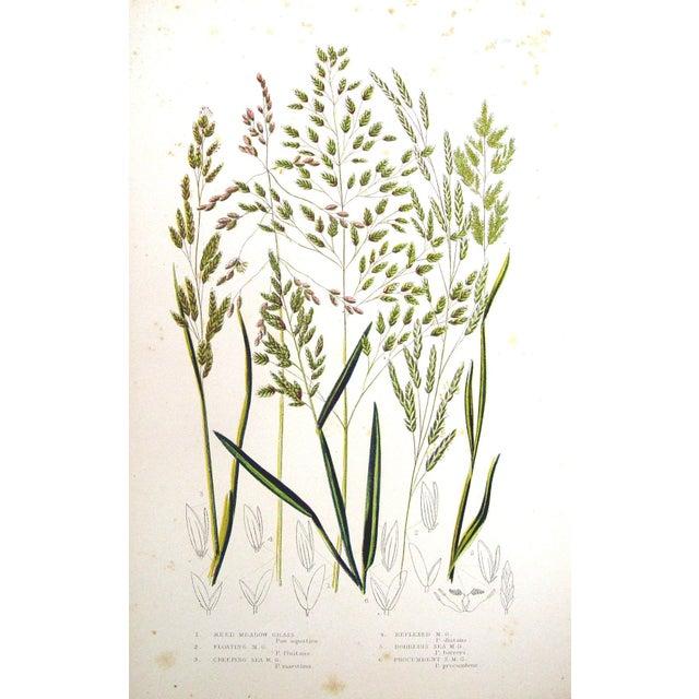 Antique 1860 Botanical Grasses Lithographs - A Pair - Image 4 of 4