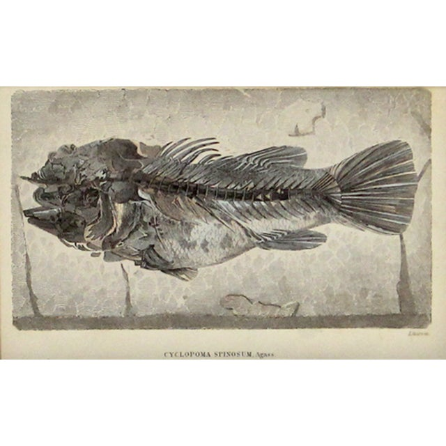 Blue Fossilized Fish Print - Image 2 of 2