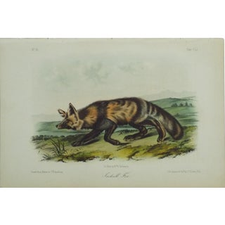 1840 Audubon's Jakall Fox Colored Lithograph