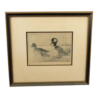 Vintage 1940 Etching of Duck Family