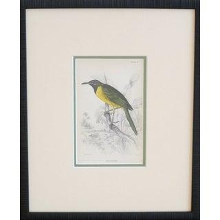 Framed Vintage Bird Print
