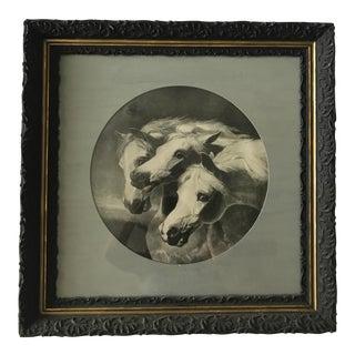 """""""Pharoah's Horses"""" Framed Print"""