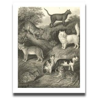 Vintage 8 Cats Archival Print