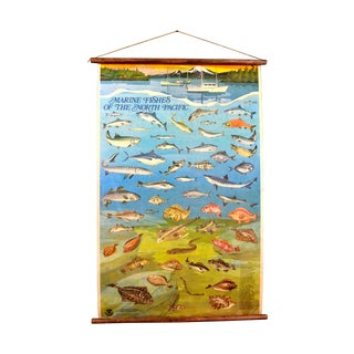 Marine Fishes Of The North Pacific Hanging Poster