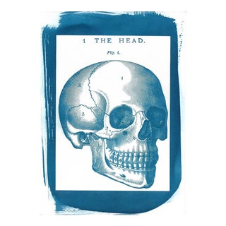 Human Skull Cyanotype Illustration Print