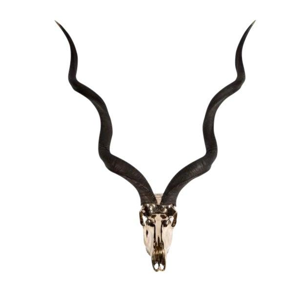 Image of Bronze Kudu Skull by Ashley Tudor