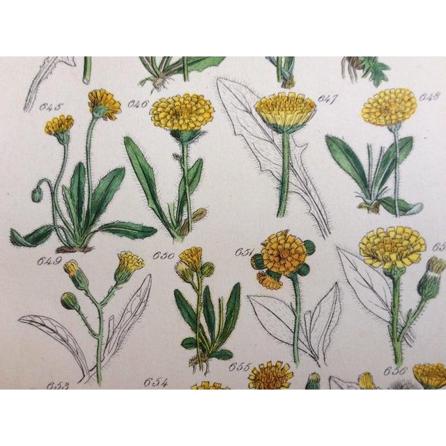 Botanical Prints C-1859 - A Pair - Image 8 of 9
