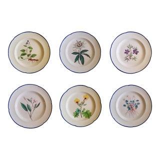 English Botanical Specimen Pearlware Set of Six Pottery Plates, Possibly Davenport