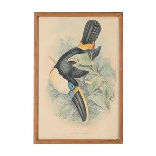 """John Gould """"Ramphatos Cuvieri-Toucan"""" Bird Litho."""