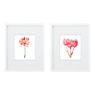 Botanical Art Print Grouping - A Pair