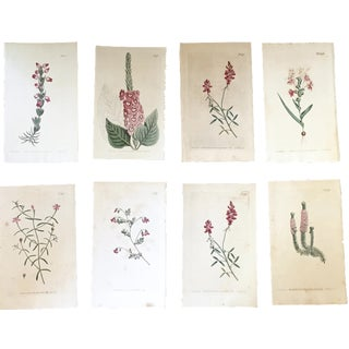 19th-Century Botanical Prints - Set of 8