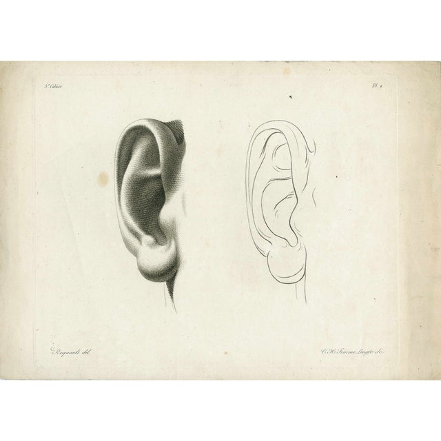 Antique 19th Century Face Engravings - Set of 3 - Image 4 of 5