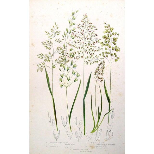 Image of Antique 1860 Botanical Grasses Lithographs - A Pair