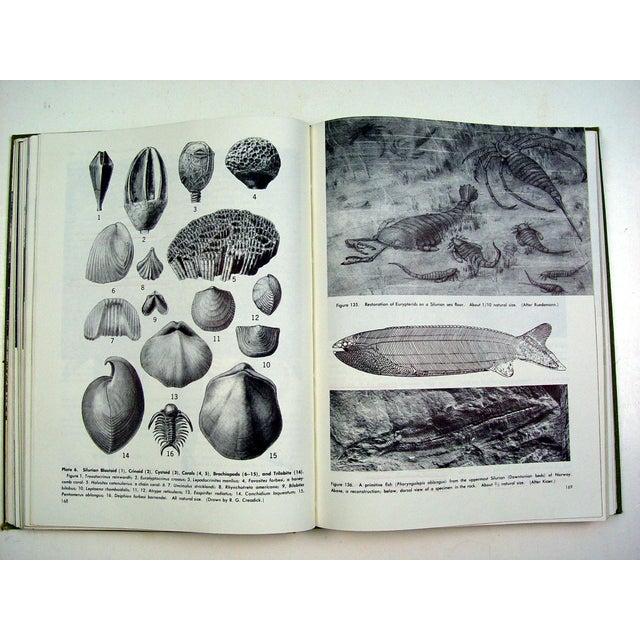 Historical Geology Paleontology - Image 4 of 6