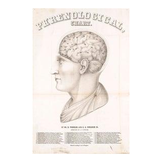 Phrenology Print of Medical Illustration
