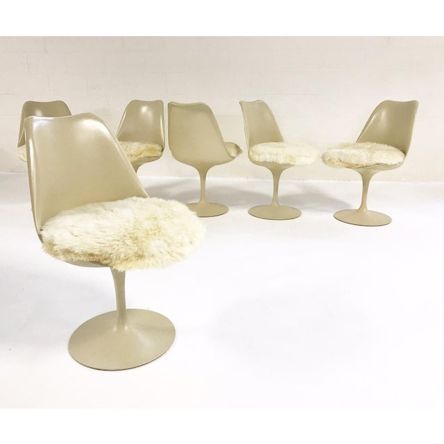 Eero Saarinen Tulip Chairs with Custom Brazilian Sheepskin Cushions - Set of 6 - Image 9 of 9