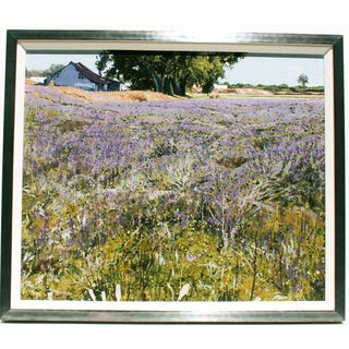 Lavender Fields of Southern France  - A Pair