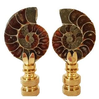 Ammonite Fossil Lamp Finials - A Pair