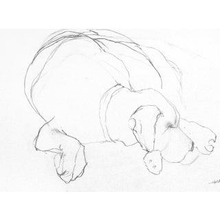 Sleeping Dog Drawing
