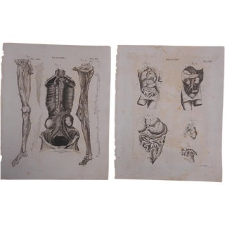 Antique Anatomy Engravings - A Pair