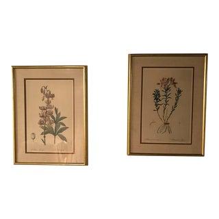 Framed Redouté Botanical Lithographs - A Pair