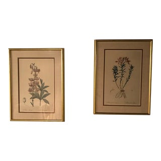 Framed Redouté Botanical Lithographs - A Pair