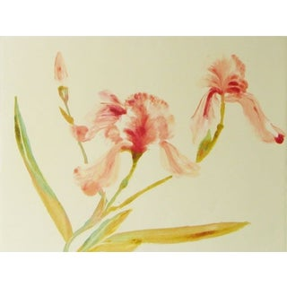 Art Print - Two Pink Irises by Sylvia Roth
