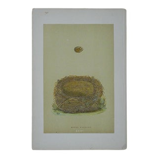 Antique Hand Colored Morris Nest & Egg Woodblock Print