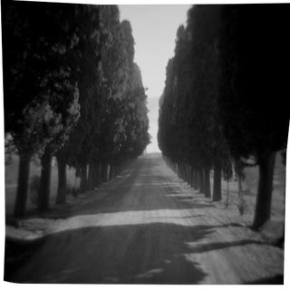 """Cypress Alle"" Black & White Photograph"