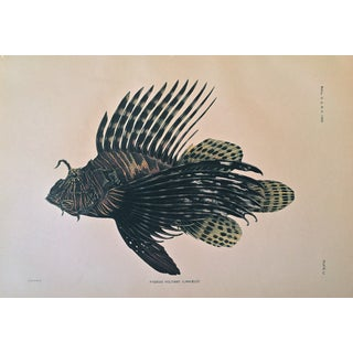 Antique Lithograph Hawaiian Fish C.1905