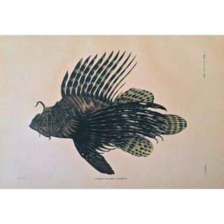 Antique Lithograph Tropical Fish C.1905