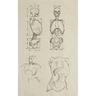 Anatomy Skeleton Study