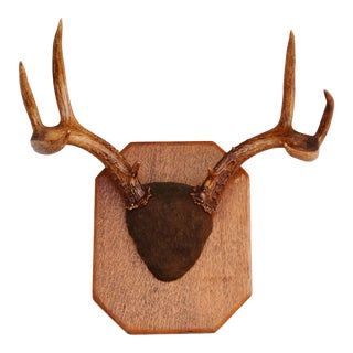 Vintage Mounted Antlers on Wood Plaque
