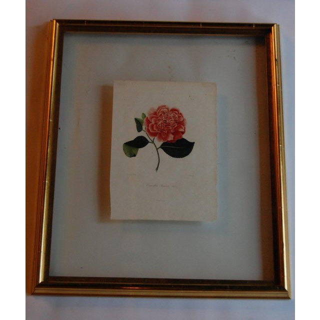 Four J.J. Jung Camellias Pressed Between Glass - Image 2 of 9